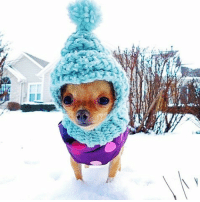 """""""Bundle up, it's cold outside!"""" www.famouschihuahua.com Photo @jewleebean__and_wheels #socute #chihuahua #sharethelove #chihuahualover #famouschihuahua #famousdog #adorablepuppy #lovedogs #tuesdaytreat: """"Bundle up, it's cold outside!"""" www.famouschihuahua.com Photo @jewleebean__and_wheels #socute #chihuahua #sharethelove #chihuahualover #famouschihuahua #famousdog #adorablepuppy #lovedogs #tuesdaytreat"""