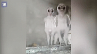 Target, Tumblr, and Aliens: bunjywunjy: unexplained-events:  Baby owls look like tiny little aliens  somebody fetch these naked little men some pants, they look cold