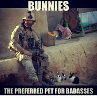 Bunnies, Memes, and Badass: BUNNIES  THE PREFERRED PET FOR BADASSES