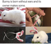 Memes, 🤖, and Bunny: Bunny is born without ears and its  owner makes some https://t.co/Ic3no3rlhA
