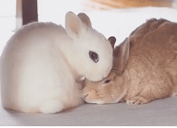 Bunny,  Bunny Kisses, and Kisses: bunny kisses