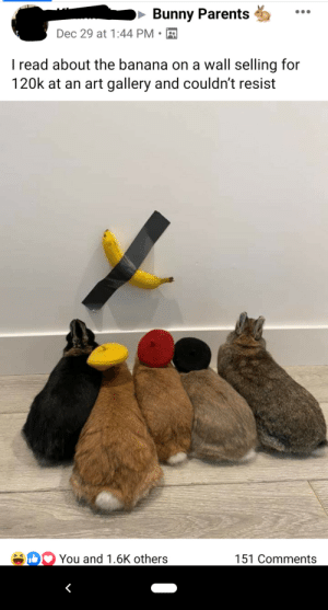 just bunny parent things: Bunny Parents  Dec 29 at 1:44 PM  I read about the banana on a wall selling for  120k at an art gallery and couldn't resist  You and 1.6K others  151 Comments just bunny parent things