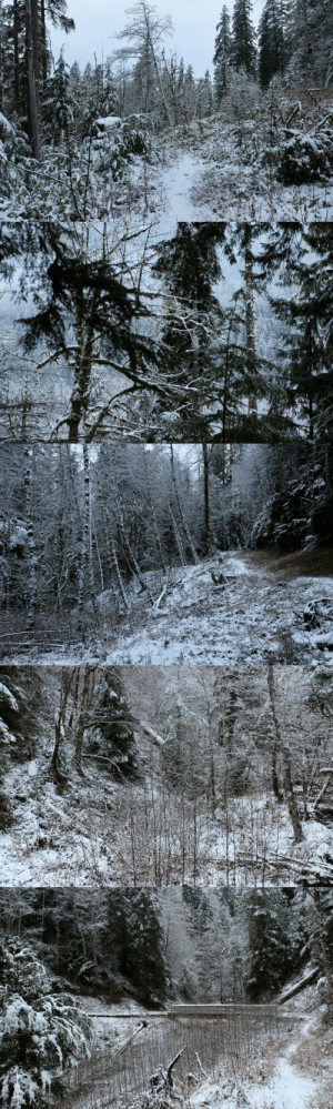 burningmine:  South Fork Skokomish Trail, December 2019: burningmine:  South Fork Skokomish Trail, December 2019