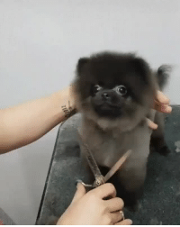 Haircut, Life, and Tumblr: burritoplant: somecutething: He loves getting his haircut! this is one of the best things if not the bestI've seen in my life