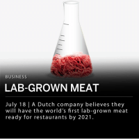 Dutch company Mosa Meat announced they have received enough funding to make and sell artificially grown meat to restaurants starting in 2021. ___ The company presented the world's first lab-grown beef burger five years ago, and has since raised 7.5 million euros ($8.8 million USD), mainly from M Ventures and Bell Food Group. Mosa Meat has also received 1 million euros from Google co-founder Sergey Brin. ___ Mosa Meat, which is based in Maastricht, hopes to reach industrial-scale production, at roughly $1 per burger patty, in 2-3 years after the first marketable burger is ready for sale. ___ Mosa Meat uses a small sample of cells taken from live animals, which they then feed with nutrients to grow into larger strands of muscle tissue. The company states it could make as many as 80,000 quarter pounders from a single sample of cells.: BUSINESS  LAB-GROWN MEAT  July 18 | A Dutch company believes they  will have the world's first lab-grown meat  ready for restaurants by 2021 Dutch company Mosa Meat announced they have received enough funding to make and sell artificially grown meat to restaurants starting in 2021. ___ The company presented the world's first lab-grown beef burger five years ago, and has since raised 7.5 million euros ($8.8 million USD), mainly from M Ventures and Bell Food Group. Mosa Meat has also received 1 million euros from Google co-founder Sergey Brin. ___ Mosa Meat, which is based in Maastricht, hopes to reach industrial-scale production, at roughly $1 per burger patty, in 2-3 years after the first marketable burger is ready for sale. ___ Mosa Meat uses a small sample of cells taken from live animals, which they then feed with nutrients to grow into larger strands of muscle tissue. The company states it could make as many as 80,000 quarter pounders from a single sample of cells.