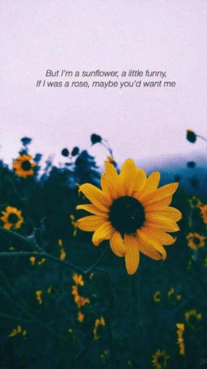 Funny If: But I'm a sunflower, a little funny  If I was a rose, maybe you'd want me  DR