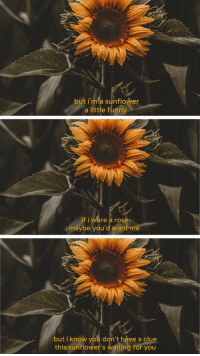 Funny If: but i'm a sunflower  a little funny  if i were a rose  maybe you'd want m  but i know you don't háve a clu  this sunflower's waiting for you