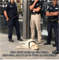 doggos-with-jobs:L A Z Y B O Y E: But l donit wanna go find drugs.  Just onee, can we go to Petco or se doggos-with-jobs:L A Z Y B O Y E