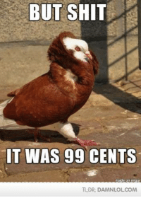 Macklemore Pidgeon: BUT SHIT  IT WAS 99 CENTS  TLDR, DAMNL OLCOM Macklemore Pidgeon