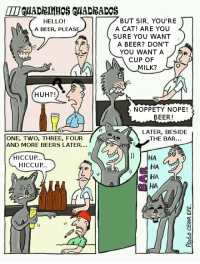 Beer, Hello, and Huh: BUT SIR, YOU'RE  HELLO!  A BEER, PLEAS  A CAT! ARE YOU  SURE YOU WANT  A BEER? DON'T  YOU WANT A  CUP OF  MILK?  HUH?!  NOPPETY NOPE!  BEER!  ㄍ  LATER, BESIDE  THE BAR...  ONE, TWO, THREE, FOUR  AND MORE BEERS LATER...  HA  HA  HA  HA  HICCUP.  HICCUP..  怂  Lu  tr