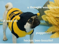 Memes, Bees, and 🤖: but  u thought was buzzo  puggerino  heck in bee-boozlin! - Donnie/Trending Memes