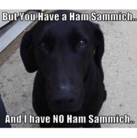 Dogs be like...: But You Have a Ham Sammich  And I have NO Ham Sammich Dogs be like...