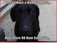 Memes, 🤖, and Ham: But You  Have a Han Sammicho  And I have NO Ham Sammich, Does this ever happen at your house?? :)