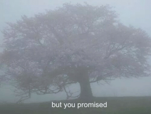you promised: but you promised