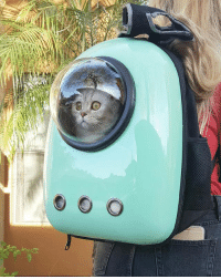 Amazon, Lol, and Memes: Butter is goin places. (And he's not so sure about it 😳) . . . . . ______________________________________________ bestmeow coi catloversclub lol catstalker cutepetclub igmeows catvideo funnyvideo topcatphoto lovekittens catsnet catsofinstagram catsofgram animaladdicts katze neko instacat amazon mybaby me catitude animallover furrbaby fluffy april fluffypack catsofig animalsco