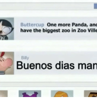 buenos dias mandy: Buttercup One more Panda, and  have the biggest zoo in Zoo Ville  Billy  Buenos dias man buenos dias mandy