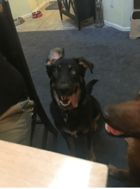 Butters, just being the special pup he is.: Butters, just being the special pup he is.