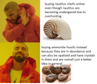 Animals, Driving, and Target: buying nautilus shells online  becoming endangered due to  overhunting  buying ammonite fossils instead  because they are in abundance and  can also be opalized and have crystals  in them and are overall just a better  idea in general tinysaurus-rex:  earth-tooth: dont support industries that are driving animals to extinction thank you!  Already reblogged one of these but another reminder: don't by nautilus shells!