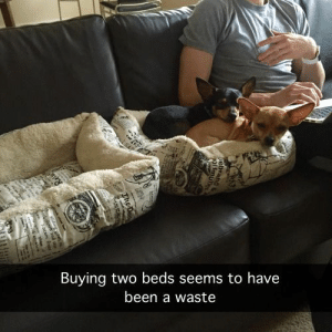 Logic, Tumblr, and Blog: Buying two beds seems to have  been a waste lolsupport:  Dog logic