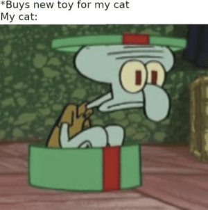 Every damn time: *Buys new toy for my cat  My cat: Every damn time