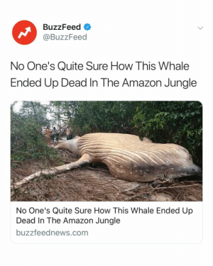 If this isn't the strangest thing you'll see today... I don't know what will be. Link in bio for the full story 🐋 (via: @buzzfeednews): BuzzFeed O  @BuzzFeed  No One's Quite Sure How This Whale  Ended Up Dead In The Amazon Jungle  No One's Quite Sure How This Whale Ended Up  Dead In The Amazon Jungle  buzzfeednews.com If this isn't the strangest thing you'll see today... I don't know what will be. Link in bio for the full story 🐋 (via: @buzzfeednews)