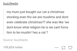 Christmas, Muslim, and Religion: buzzfeeds  my mum just bought our cat a christmas  stocking even tho we are muslims and dont  even celebrate christmas?? she was like 'we  dont know what religion he is we cant force  him to be muslim' hes a cat?  Source: buzzfeeds  109,824 notes Cat religions