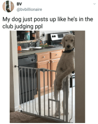 Club, Memes, and 🤖: BV  @bvbillionaire  My dog just posts up like he's in the  club judging ppl 😂 @doggocatcat