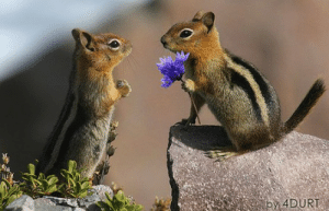 Proposing Chipmunk Picture - Cutest Paw: by 4DURT Proposing Chipmunk Picture - Cutest Paw