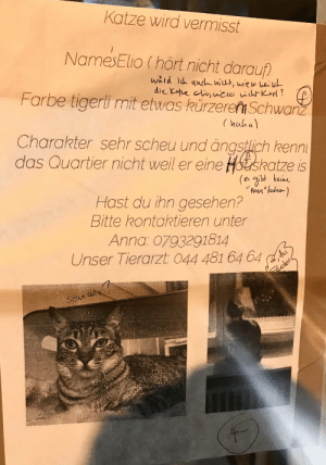 By grading on grammar mistakes on this person's missing cat poster. (Translation in comments): By grading on grammar mistakes on this person's missing cat poster. (Translation in comments)