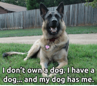 Memes, 🤖, and Lisa: by K9 instinct & Lisa Moss  I don't own a dog, I have a  dog... and my dog has me. <3