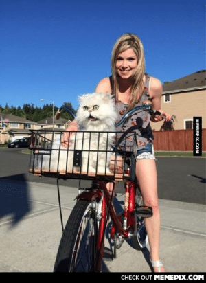 Cat's first bike ride. Was not pleased.omg-humor.tumblr.com: CНЕCK OUT MЕМЕРІХ.COM  МЕМЕРIХ.сом Cat's first bike ride. Was not pleased.omg-humor.tumblr.com