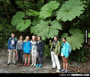 The leaves of the Giant Rhubarb.omg-humor.tumblr.com: CНЕCK OUT MEМЕРIХ.COM  MEMEPIX.COM The leaves of the Giant Rhubarb.omg-humor.tumblr.com