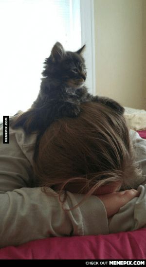 Omg, Tumblr, and Http: CНECK OUT MЕМЕРIХ.COM  МЕМЕРIХ.Сом This kitten thinks she is Pride Rockomg-humor.tumblr.com