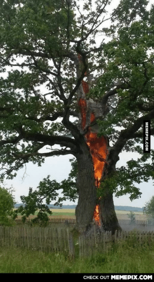 This is how lightning strike damaged tree today in Lithuania.omg-humor.tumblr.com: CНECK OUT MЕМЕРIХ.COM  MEMEPIX.COM This is how lightning strike damaged tree today in Lithuania.omg-humor.tumblr.com