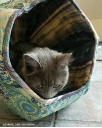 Taking a break in our lovely Cat Ball... 😊 ~ Merlin: (c) Mystic Cats our stories Taking a break in our lovely Cat Ball... 😊 ~ Merlin