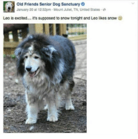 tag urself i'm gertrude: C)  Old Friends Senior Dog Sanctuary  January 20 at 12:32pm . Mount Met. TN, United States .  Leo is excited  it's supposed to snow tonight and Leo likes snow tag urself i'm gertrude