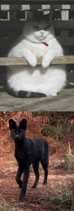 Tumblr, Blog, and Http: c9x13nczstyj: cryptids of opposing powers