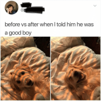 Good, Boy, and Him: Ca  before vs after when I told him he was  a good boy 'Good boy' does the trick again via /r/wholesomememes https://ift.tt/2MpxpnX
