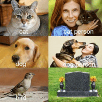 Dog, Cat, and Person: ca  cat person  dog