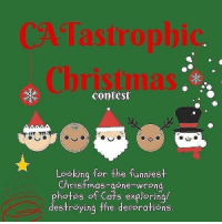 """Another One, Cats, and Christmas: CA Tastrophic  Christmas  contest  Looking for the funniest  Ch  ristmas-gone-wrong  a s explorin  photos of C a/  destroying the decorations 🎄""""CATastrophic Christmas""""🎄  Get seen by almost a million accounts PLUS prizes worth more than 800$  Each cat is unique in its very own way, from the way that it sleeps to its mischievous play. While one may climb the Christmas tree, another one uses Jesus' crib for a pee. One may get caught up in the lights, another plays with loud ornaments throughout the nights.  One may decide all gifts need to be unwrapped, while another ate all the cookies without getting trapped.  The most rare example is the ever good cat, but a little creativity could make us not believe that!  It doesn't have to be very hard, swipe to the left for a head start! Swipe left to see our amazing prizes too!  🎁Prize 1 • Feature by all the hosts • Origami Pet Cave van @Bunnydesign.nl • 1 Reolink Argus 2 IP-camera @reolinkcams  ⠀ 🎁Prize 2 • Story Feature by all the hosts • Catastrophic Creations Giftcard of 220$ @catastrophicreations • 1 Reolink Argus 2 IP-camera @reolinkcams  ⠀ 🎁Prize 3 • StoryFeature by all the hosts • Surefeed Microchip Pet Feeder @surepetcare  Check out how to enter our pawty... 🔹Rules are simple🔹  1. Follow all the hosts and show them some love. @catstagramcat @instacat_meows @cat_features @catswiththeirtonguesout @catasticworld @yourcatphoto @best.cats.club @meowstagram @meowfeature @happiness_on_paws  2.🔴 Use the hashtag catastrophicchristmas2018 on your mischief christmas pictures.  3. Tag 3 furriends in THIS post to join the pawty.  4. BONUS ENTRY: (for a higher chance of winning) - Tag more than 3 friends - Share our giveaway in your story and tag all the hosts. - FOLLOW OUR SPONSORS  @surepetcare @reolinkcams @Bunnydesign.nl @catastrophicreations  🔷Other information: - Your account must be public - Unlimited entries - Winners will be selected based on activity and image quality. - Winners announced"""