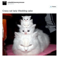 Kitties, Memes, and Photoshop: CAA.  cataddictsanonymouse  @cat addicts  Crazy cat lady Wedding cake  Follow  MOUSE No kitties were harmed during the photoshopping of this picture :-)