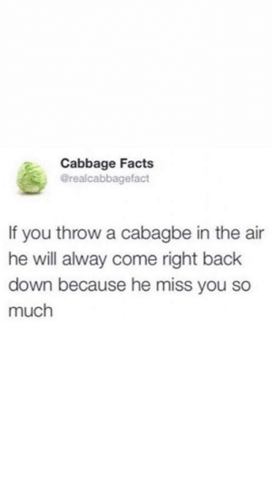 Cabbage Loves You: Cabbage Facts  @realcabbagefact  If you throw a cabagbe in the air  he will alway come right back  down because he miss you so  much Cabbage Loves You