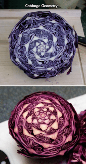 Tumblr, Blog, and Nature: Cabbage Geometry... srsfunny:Nature Fractals Are Amazing