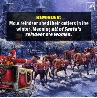 Memes, Winter, and The Real: CAFE  REMINDER:  Male reindeer shed their antlers in the  winter. Meaning all of Santa's  reindeer are Women. Once again, women doing all the real work here.