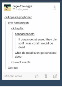 Free, Current Events, and Hamburger: cage-free-eggs  instagrarn  calliopesragingboner:  one-hamburger:  dicksp8ir:  fionaaelizabeth  If corals get stressed they die,  so if I was coral I would be  dead  what do coral even get stressed  about  Current events  Get out.  552,858 notes current events https://t.co/htESkacFR0