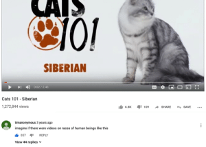 Cats, Videos, and Irl: CAIS  SIBERIAN  0:02/2:48  CC  LL  Cats 101 - Siberian  1,272,844 views  109 ריס  6.8K  SHARE  ESAVE  timanonymous 3 years ago  imagine if there were videos on races of human beings like this  857  REPLY  View 44 replies me_irl