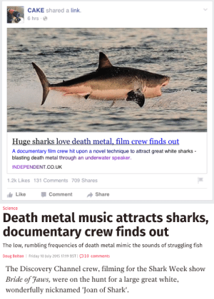 Doug, Friday, and Life: CAKE shared a link.  6 hrs.  Huge sharks love death metal, film crew finds out  A documentary film crew hit upon a novel technique to attract great white sharks  blasting death metal through an underwater speaker  INDEPENDENT CO.UK  1.2k Likes 131 Comments 709 Shares  Like -Comment → Share   Science  Death metal music attracts sharks,  documentary crew finds out  The low, rumbling frequencies of death metal mimic the sounds of struggling fish  Doug Bolton Friday 10 July 2015 17:19 BST 10 comments   The Discovery Channel crew, filming for the Shark Week show  Bride of Faus, were on the hunt for a large great white.  wonderfully nicknamed 'Joan of Shark'. horce-divorce:  this is the best headline i've ever seen in my life, i was just gonna post it w/o comment bc i thought it couldnt possibly get better, but it did