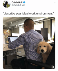"""Memes, Work, and Pup: Caleb Hull  @CalebJHull  """"describe your ideal work environment""""  10 Yep this about does it. Via @calebjhull Pup @jackthegoldboy"""