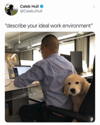 "(@calebjhull) also the dog in the pic is @jackthegoldboy and you should all follow him: Caleb Hull  @CalebJHull  ""describe your ideal work environment""  30 (@calebjhull) also the dog in the pic is @jackthegoldboy and you should all follow him"