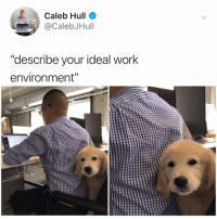 "Y the hell havent u followed @kalesaladanimals yet: Caleb Hull  @CalebJHull  ""describe your ideal work  environment"" Y the hell havent u followed @kalesaladanimals yet"